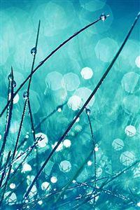 Grass Dew Flower Nature iPhone 4s wallpaper