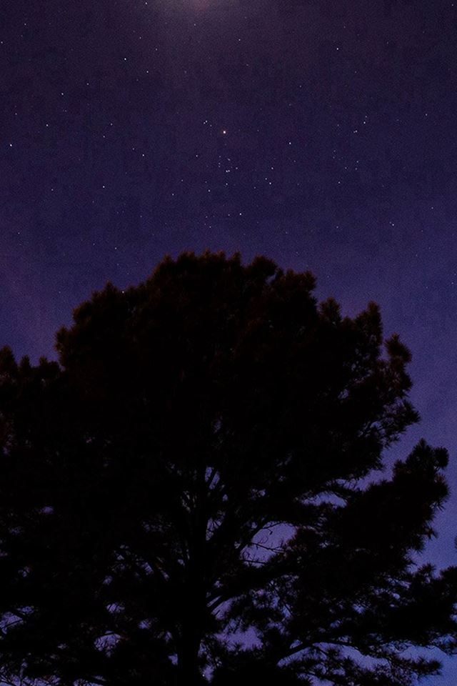 One Star Shine Night Dark Blue Sky Wood IPhone 4s Wallpaper