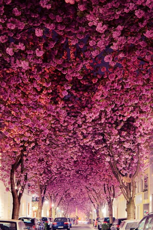 Flowers Branch Grove Car Parking Road iPhone 4s wallpaper