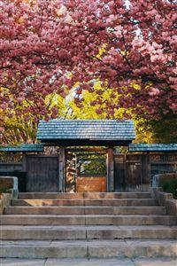 Log Cabin Door Nature Flower Branch iPhone 4s wallpaper