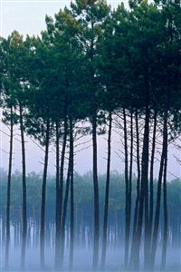 Nature Misty Grove Trees Scenery iPhone 4s wallpaper