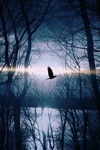 Wood Night Dark Nature Bird Fly Lake iPhone 4s wallpaper
