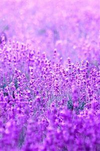 Pure Dreamy Flowers Garden Field Blur iPhone 4s wallpaper