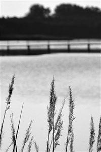 Lake View Flower Water Calm Nature Bokeh Dark Bw iPhone 4s wallpaper