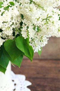 Pure White Flowers Plant Vase iPhone 4s wallpaper