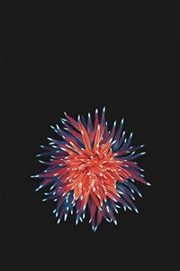 Shiny Little Flower In Dark iPhone 4s wallpaper