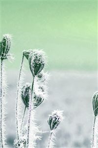Snow Cold Winter Flower Bokeh Nature Flare Green iPhone 4s wallpaper