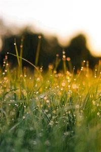 Lawn Green Nature Sunset Light Bokeh Spring iPhone 4s wallpaper