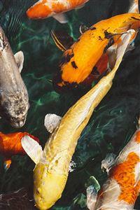 Fish Water Animal Swim iPhone 4s wallpaper