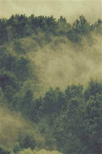 Forest Wood Fog Nature Green Mountain iPhone 4s wallpaper