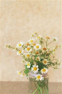 Pure Simple Daisy Flower Water Glass Vase iPhone 4s wallpaper