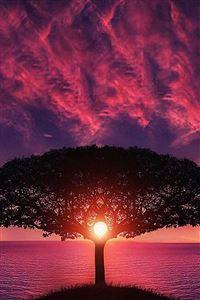 Sea Tree Purple Sky Nature iPhone 4s wallpaper