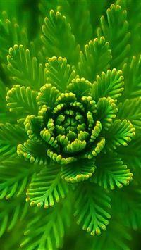 Algae Plant Macro Close Up iPhone 4s wallpaper