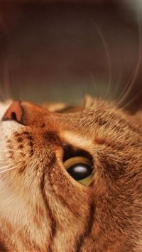 Cat Lying Cool Cat Beautiful iPhone 4s wallpaper