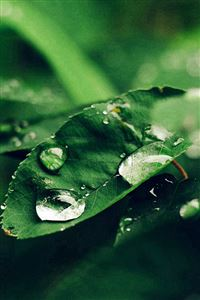 Leaf Rain Green Nature Forest Blue iPhone 4s wallpaper
