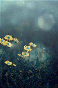 Night Dark Little Daisy Flower Lawn Grassland Bokeh iPhone 4s wallpaper