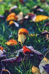 Fall Leaf Nature Green Backyard Blue Dark iPhone 4s wallpaper