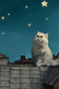 White Persian Cat Kitten Fairy Tale Fantasy Roofs Houses Sky Night Stars Moon iPhone 4s wallpaper