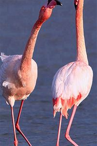 Camargue Rose Flamingo iPhone 4s wallpaper