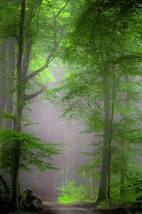 Forest Morning Mist iPhone 4s wallpaper
