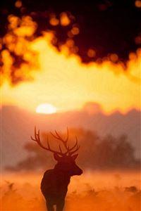 Elk Animal Wandering Sunset Grassland iPhone 4s wallpaper