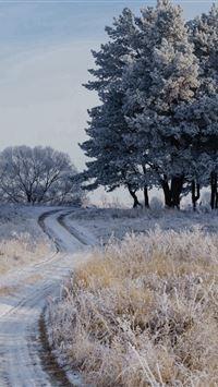 Field Frost Grass Trees iPhone 4s wallpaper