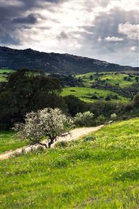 Hillside Beauty iPhone 4s wallpaper