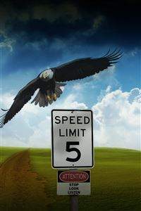 Eagle Speed Limit iPhone 4s wallpaper