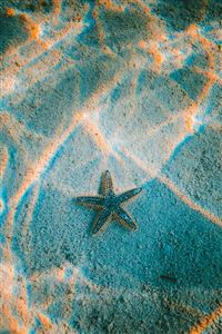 Starfish sea beach iPhone 4s wallpaper
