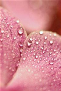 Flower Petals iPhone 4s wallpaper