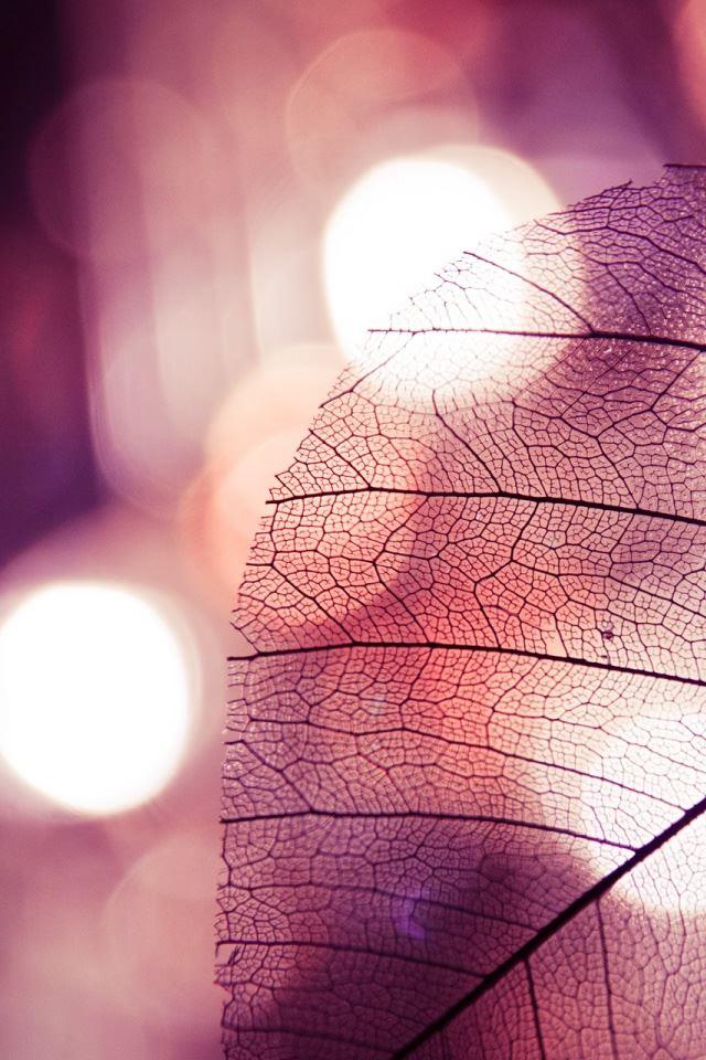 Leaf iPhone 4s wallpaper