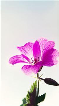 Little Purple Flower Macro iPhone 8 wallpaper