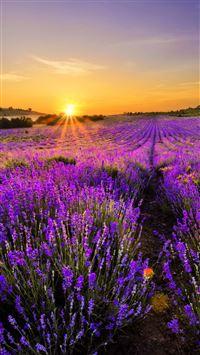 Lavender World iPhone 8 wallpaper