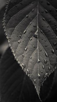 Gray Leaf Macro iPhone 6(s)~8(s) wallpaper