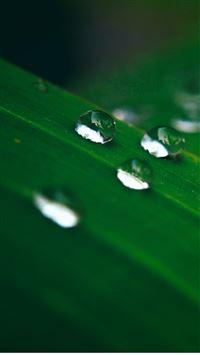 WaterDrop On Leaf iPhone 8 wallpaper