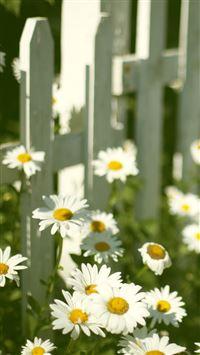 White Daisy Near Fence iPhone 8 wallpaper