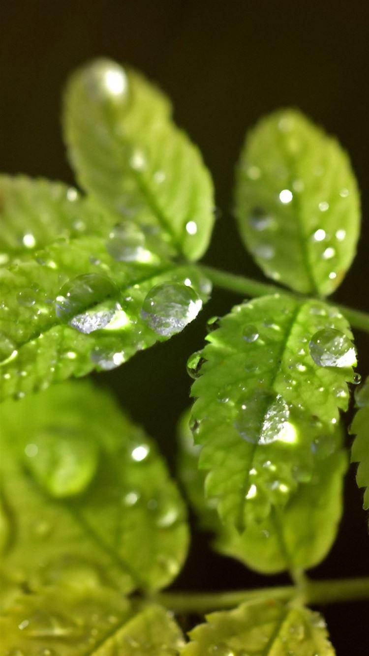 Macro Leaf Water Drop IPhone 8 Wallpaper
