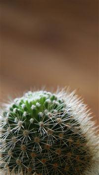 Desert Cactus Macro Blur iPhone 8 wallpaper