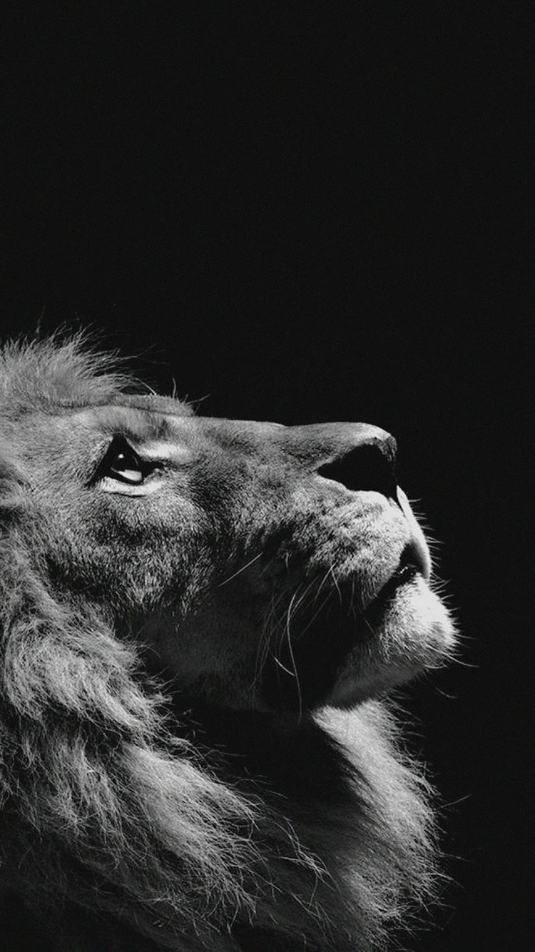 Lion Looking Sky Animal Nature Dark Photo iPhone 8 wallpaper