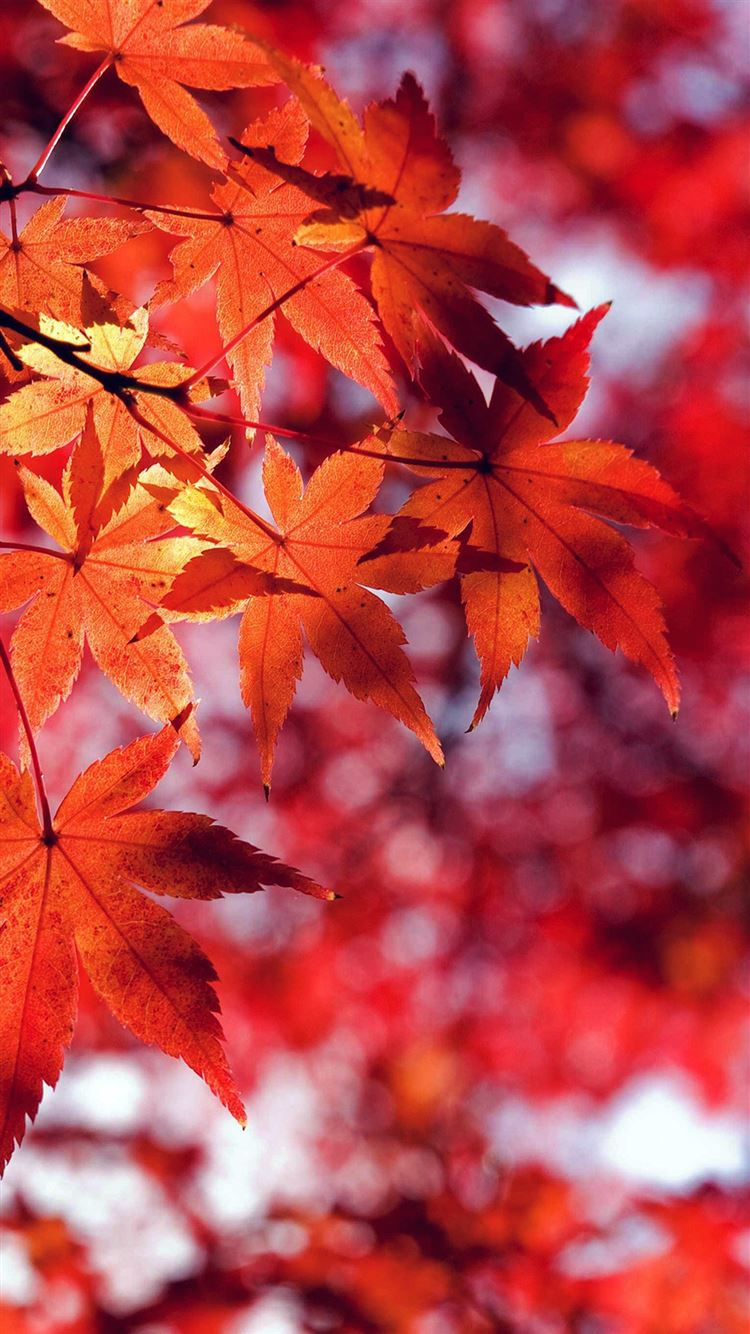 Fall Leaf Red Mountain Bokeh IPhone 8 Wallpaper