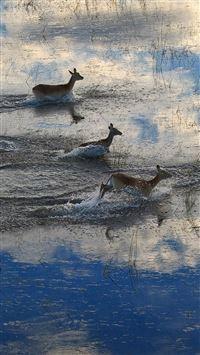 Migration Of Deer  iPhone 8 wallpaper