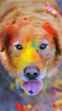Colorful Paint Giant Dog Animal iPhone 6(s)~8(s) wallpaper