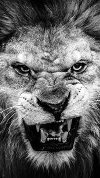 Dark Fierce Lion Face Macro iPhone 6(s)~8(s) wallpaper
