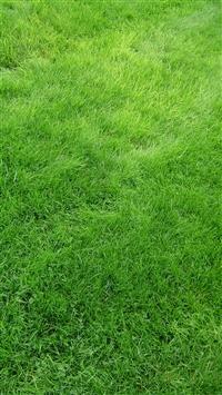 Texture Grass Field Green iPhone 8 wallpaper