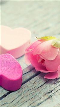 Nature Elegant Pure Rose Flower iPhone 8 wallpaper