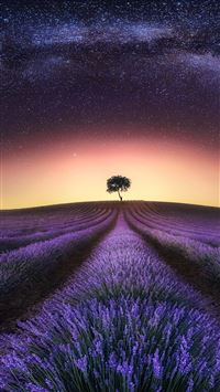 Lavender At Night  iPhone 8 wallpaper