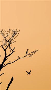 Minimal Tree Birds Sunset iPhone 8 wallpaper