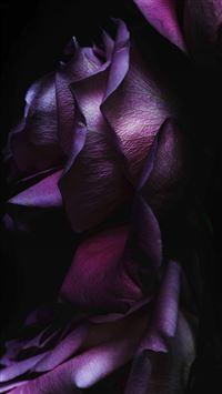 Pure Elegant Rose Flower Macro iPhone 8 wallpaper