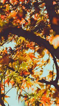 Fall Tree Leaf Autumn Nature Mountain iPhone 8 wallpaper