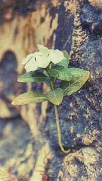 Nature Dew Flower Living Rock Wall iPhone 8 wallpaper